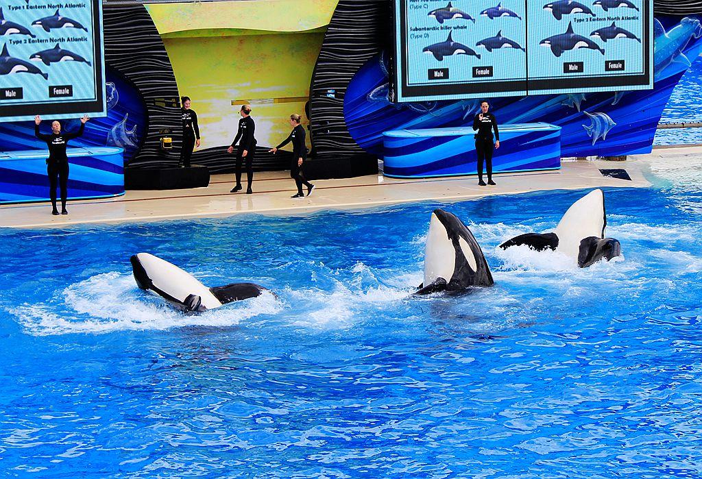 圣地亚哥海洋公园虎鲸表演_图1-12