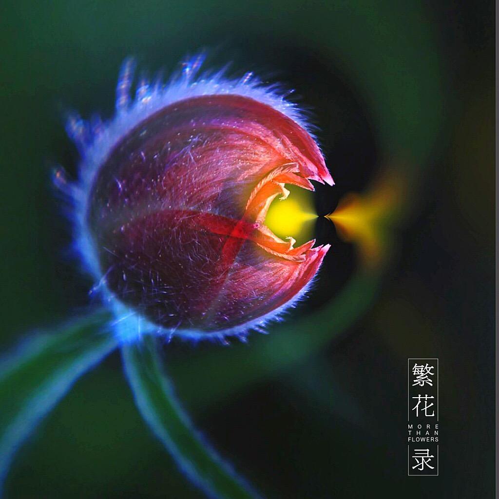 花开有声_图1-5