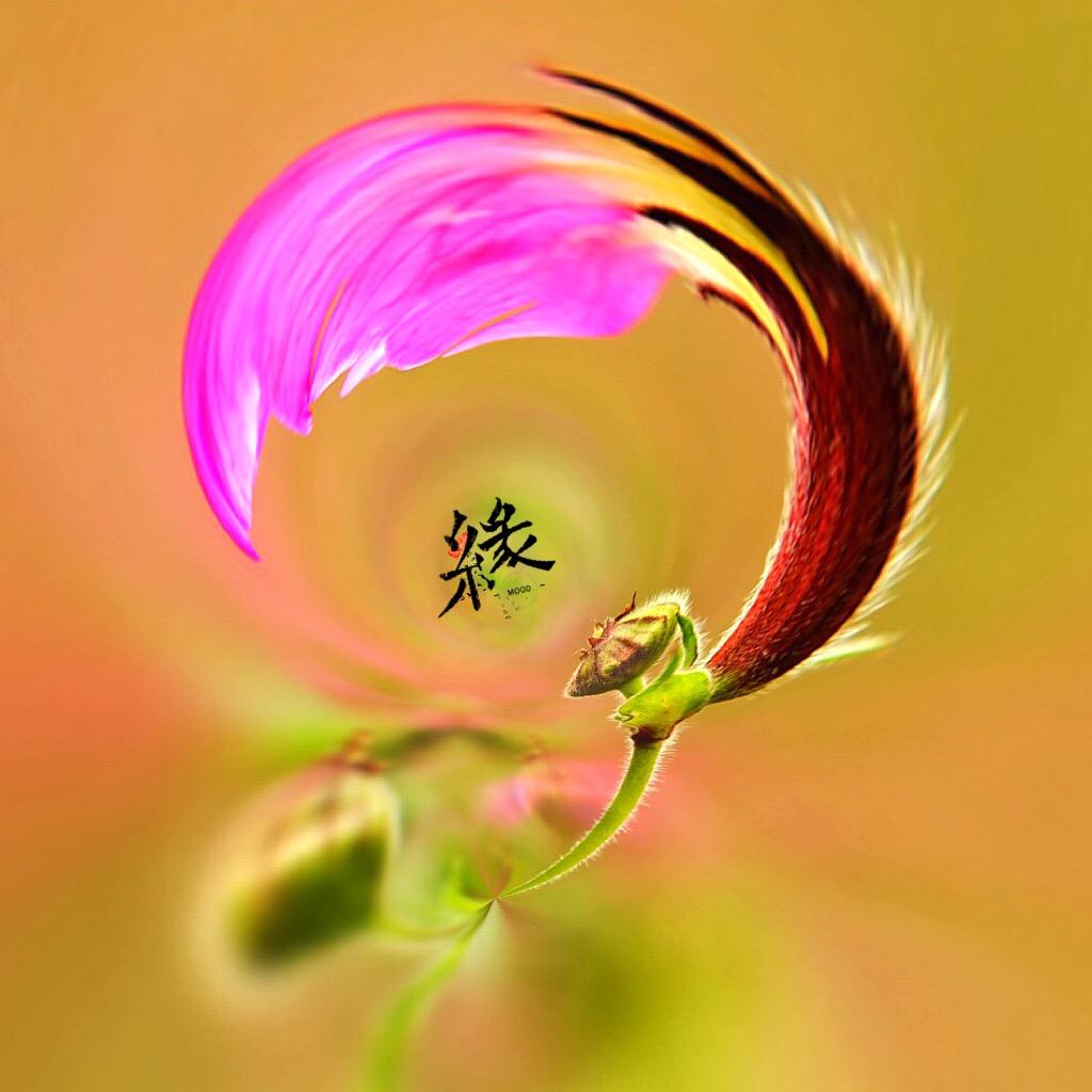 花开有声_图1-4
