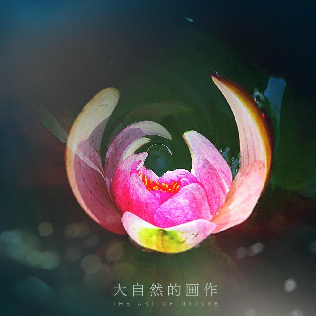 花开有声_图1-2