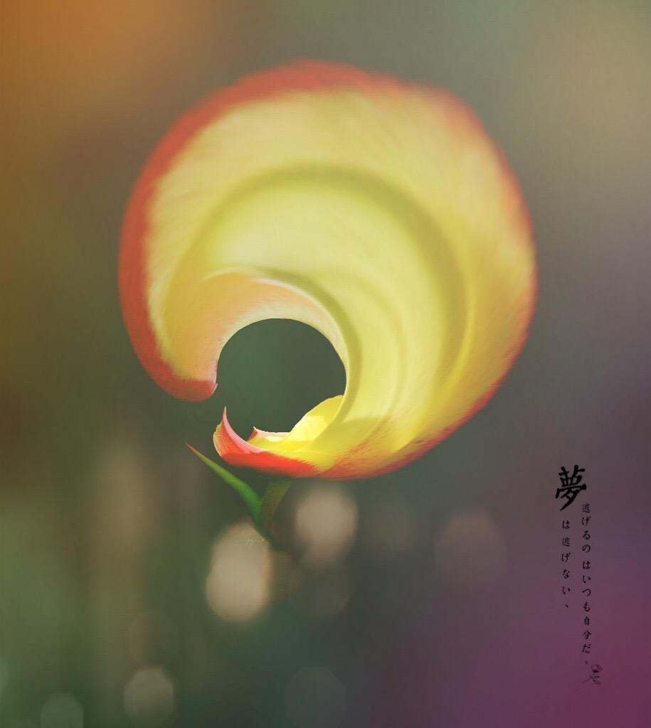 花开有声_图1-11