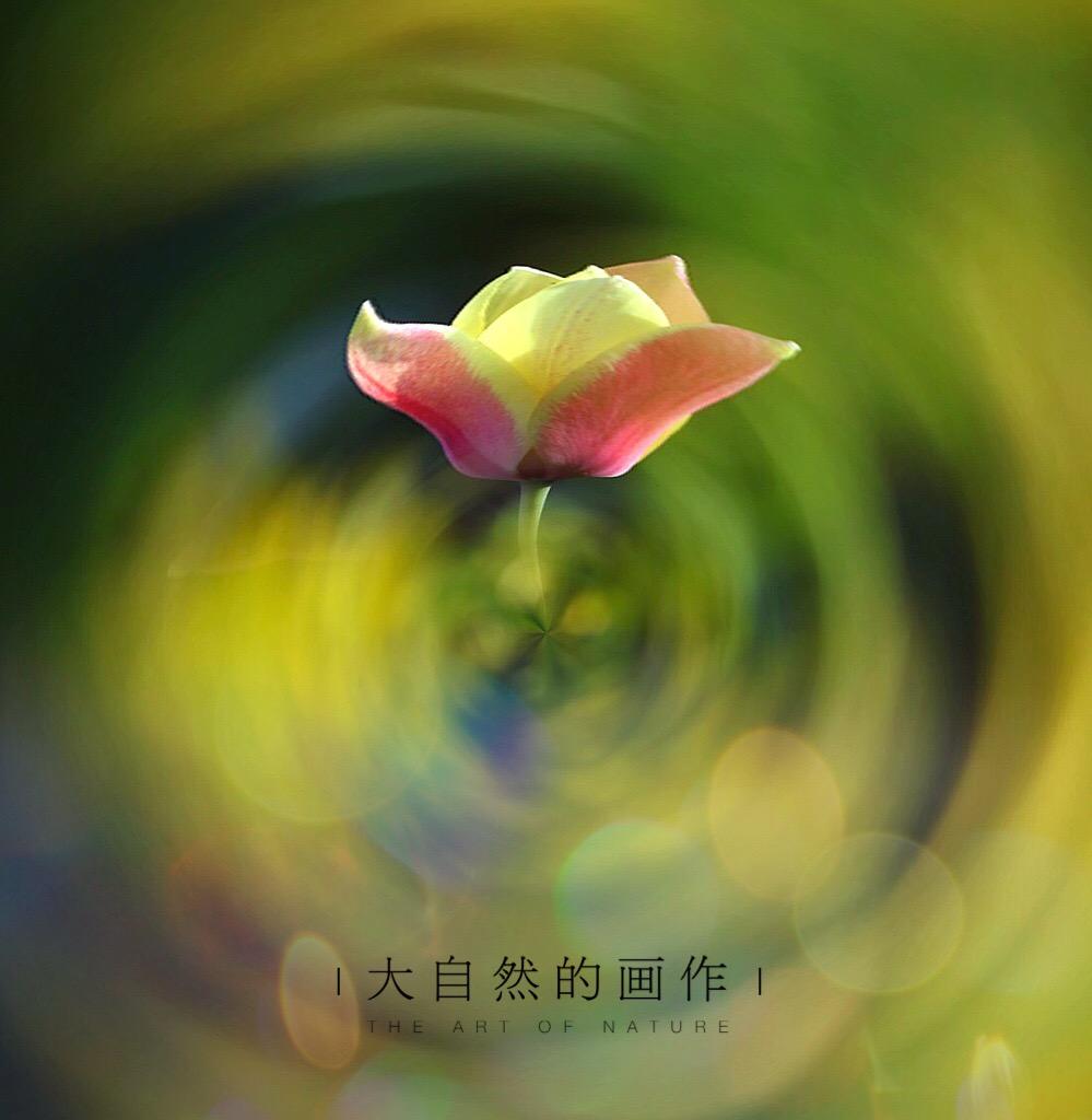 花开有声_图1-13
