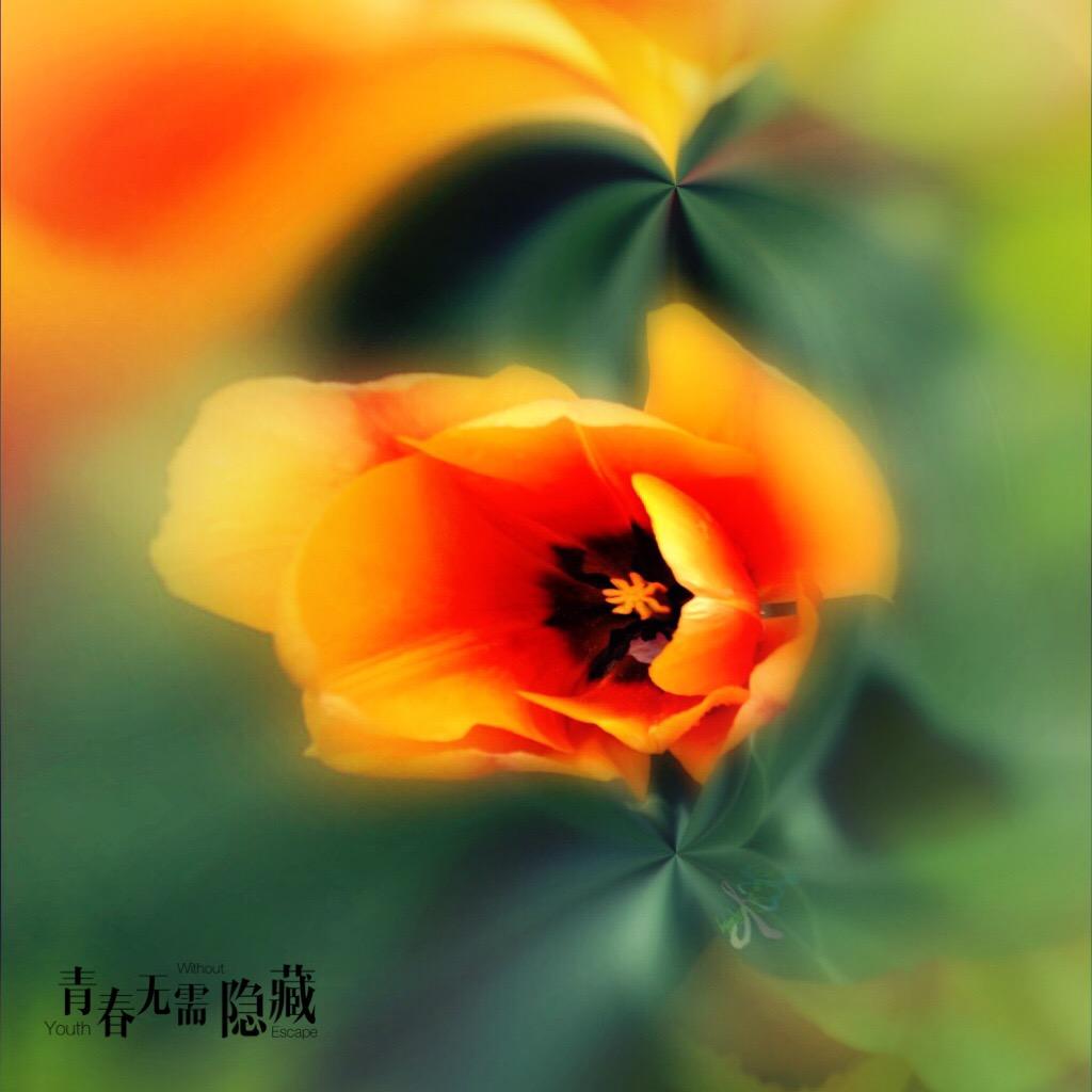 花开有声_图1-17