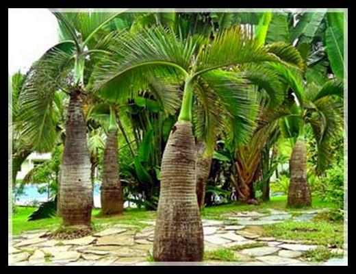 【原创】南国棕榈何其多