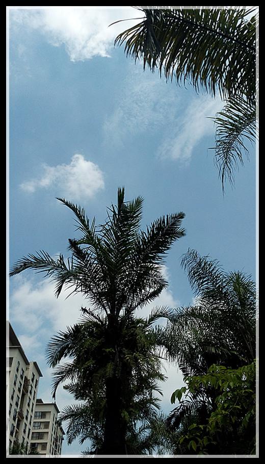 【原创】南国棕榈何其多_图1-5