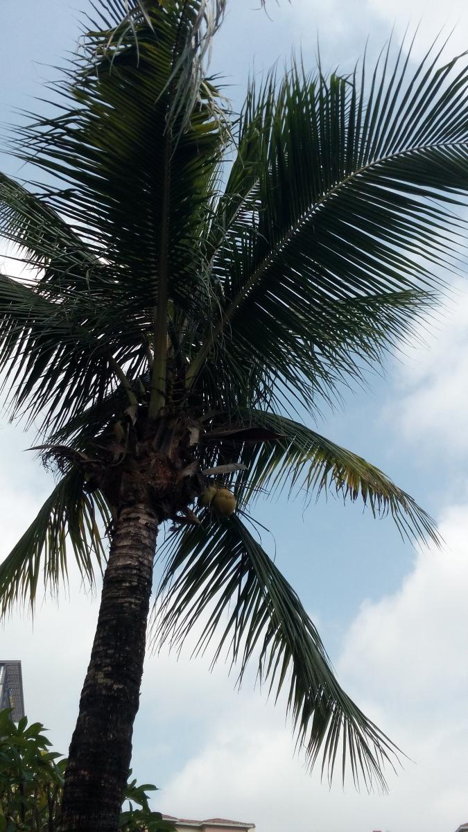 【原创】南国棕榈何其多_图1-7