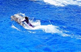 圣地亚哥海洋世界海豚表演