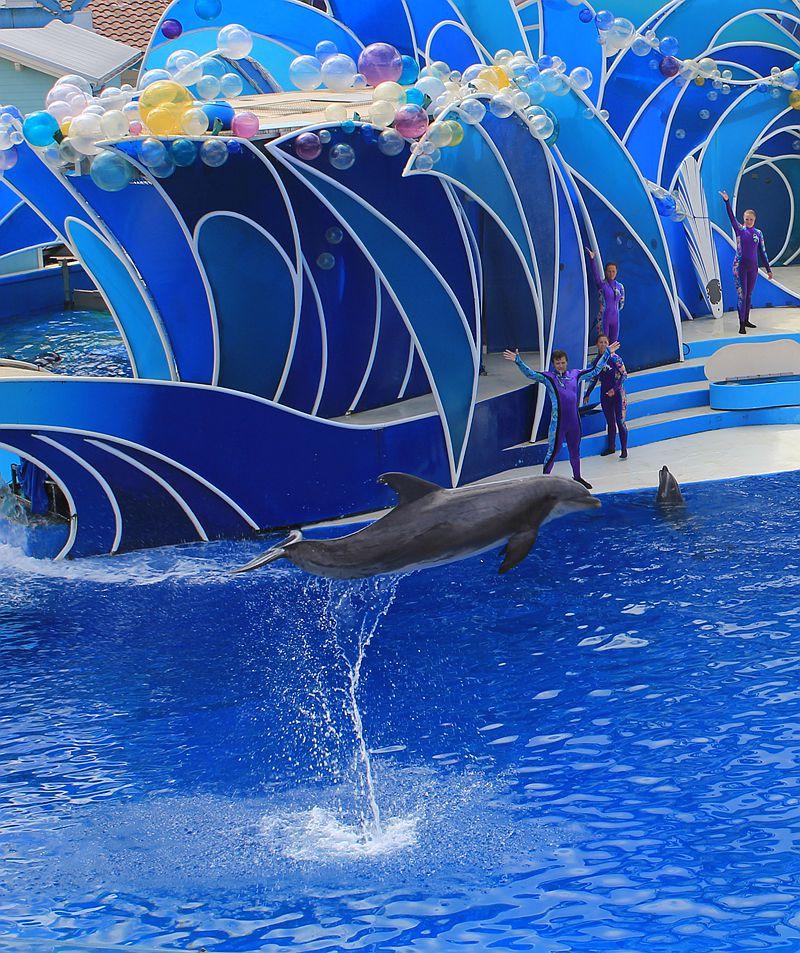 圣地亚哥海洋世界海豚表演_图1-2