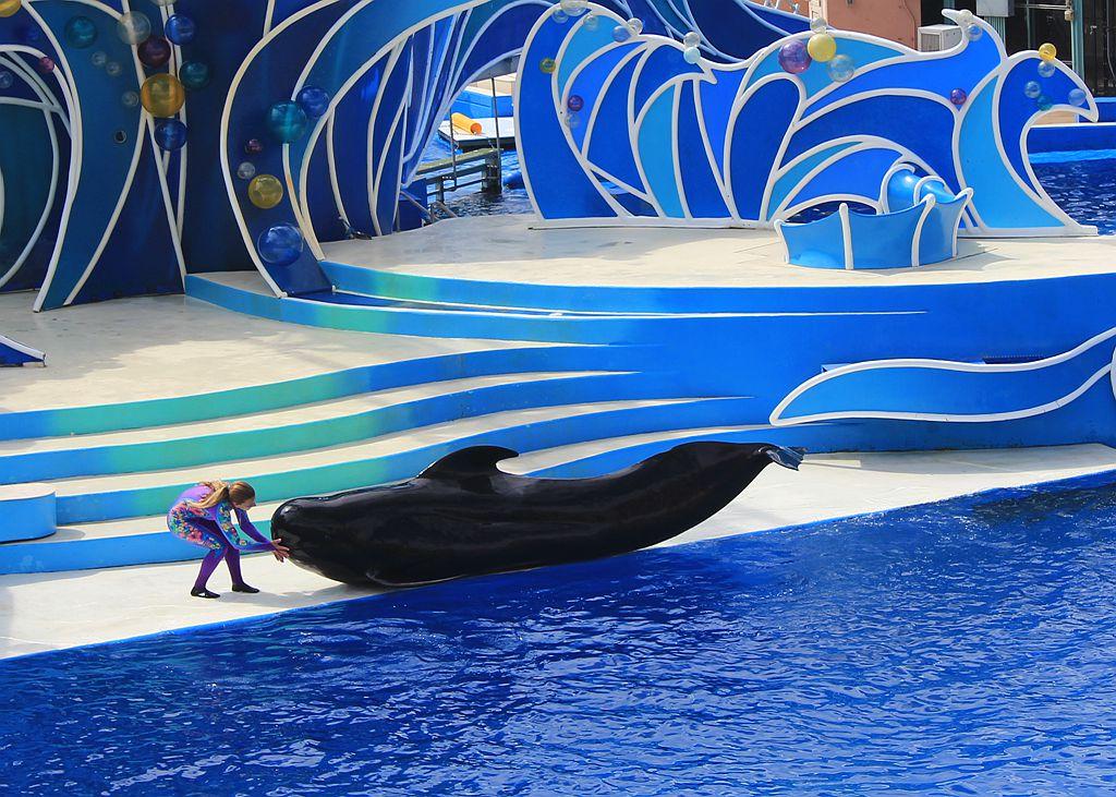 圣地亚哥海洋世界海豚表演_图1-3