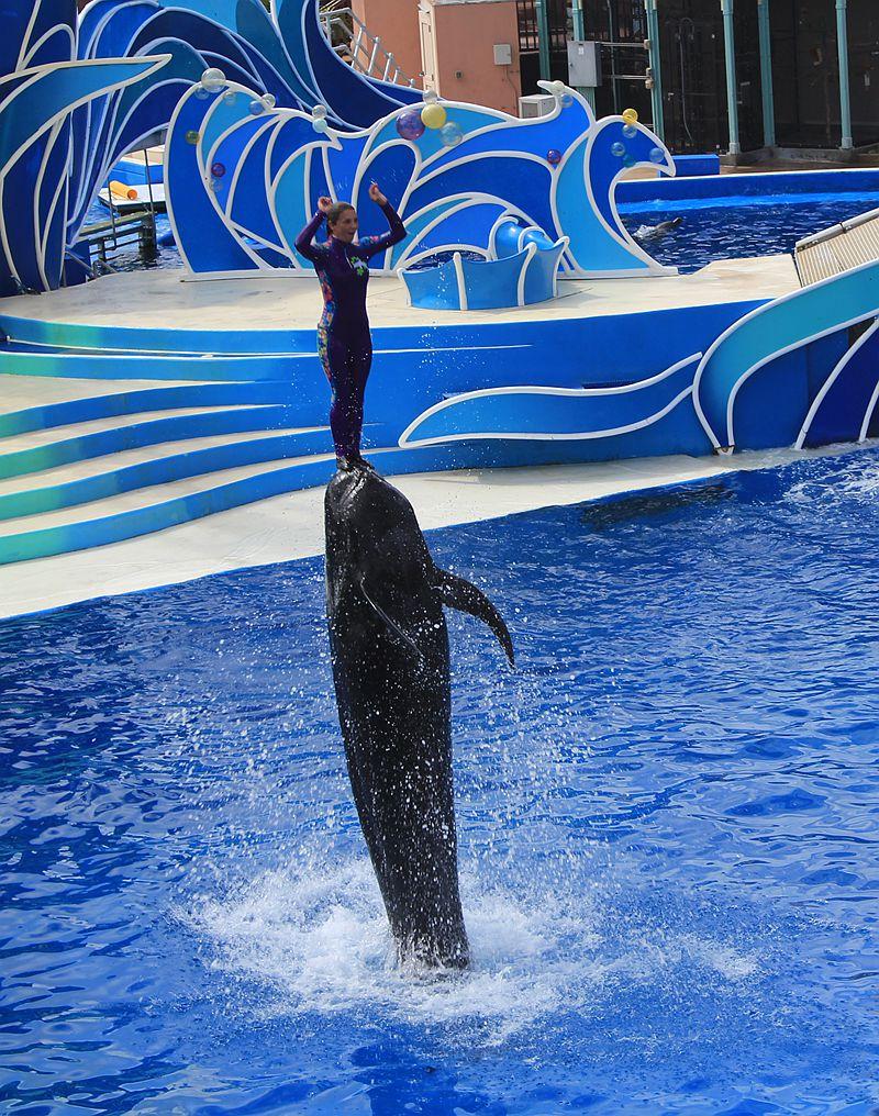 圣地亚哥海洋世界海豚表演_图1-4