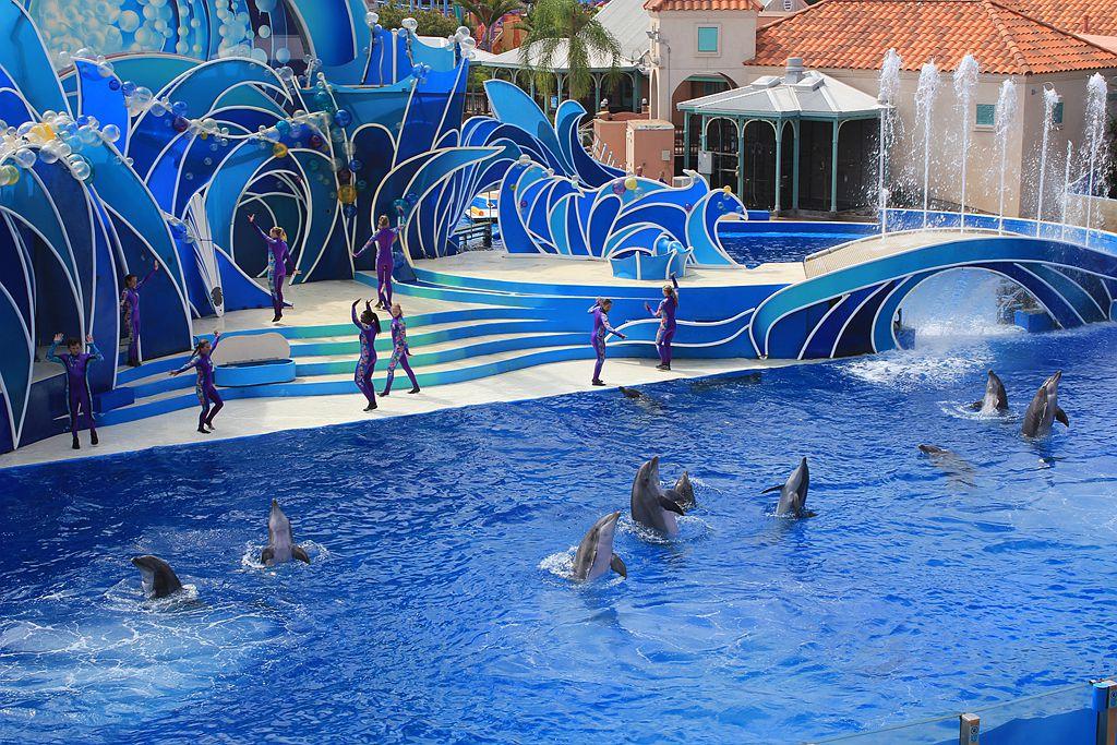 圣地亚哥海洋世界海豚表演_图1-5