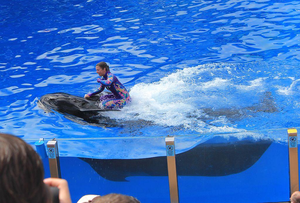 圣地亚哥海洋世界海豚表演_图1-6