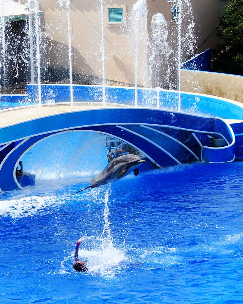 圣地亚哥海洋世界海豚表演_图1-7