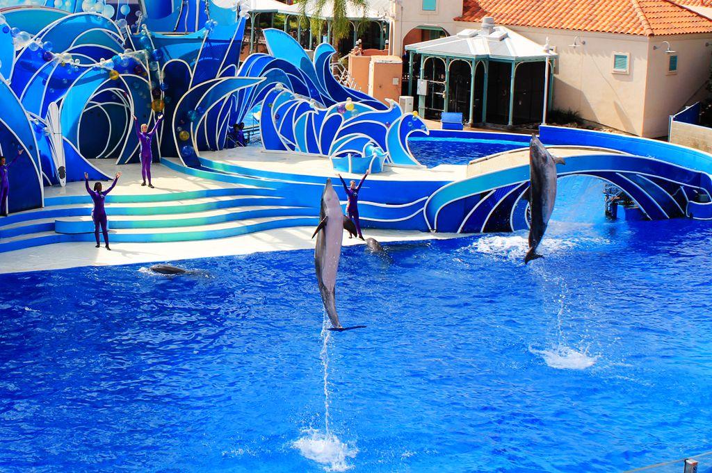 圣地亚哥海洋世界海豚表演_图1-8