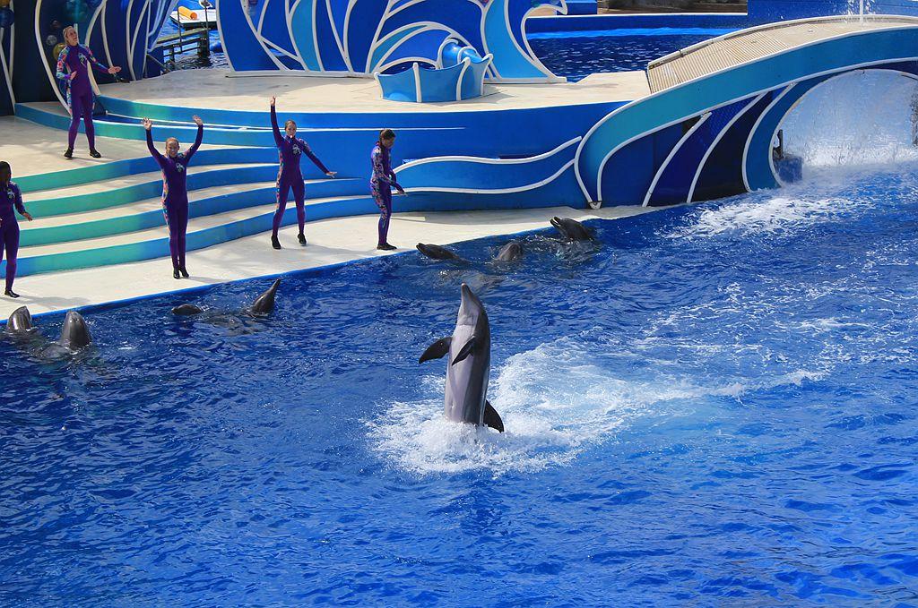 圣地亚哥海洋世界海豚表演_图1-11
