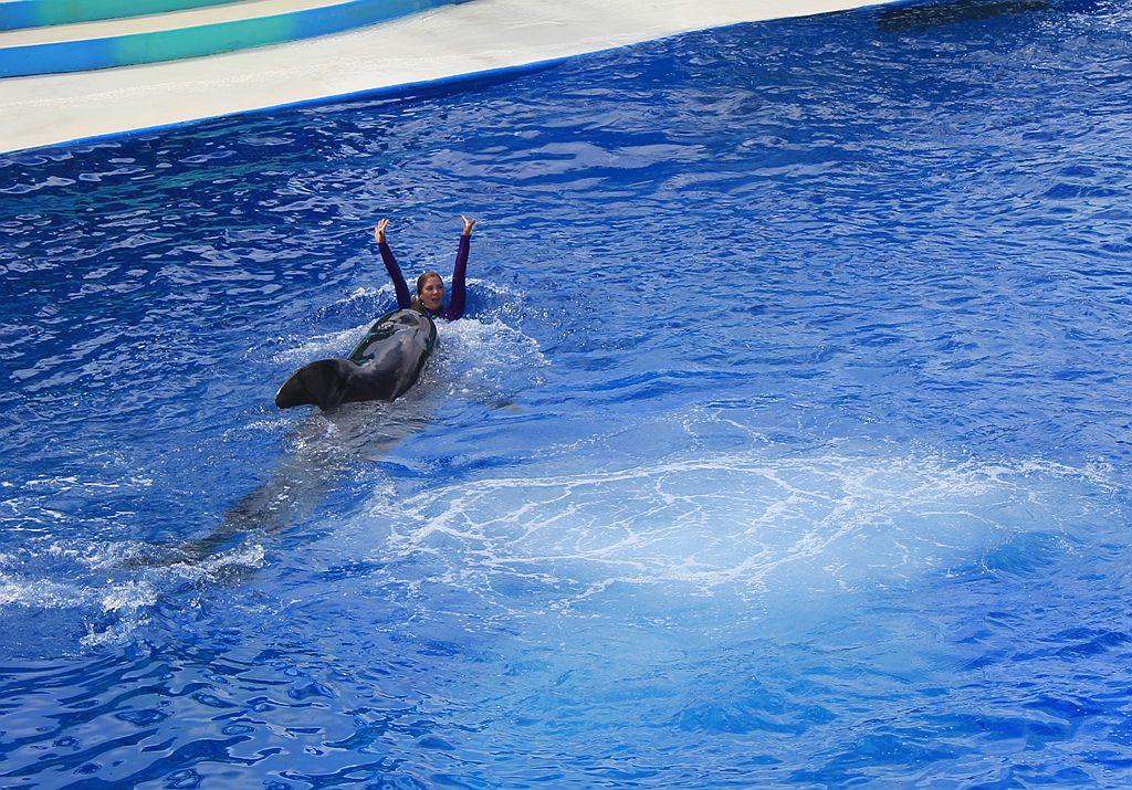 圣地亚哥海洋世界海豚表演_图1-9