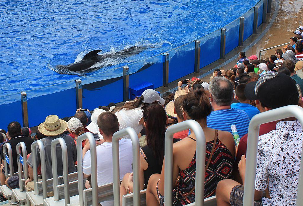 圣地亚哥海洋世界海豚表演_图1-13