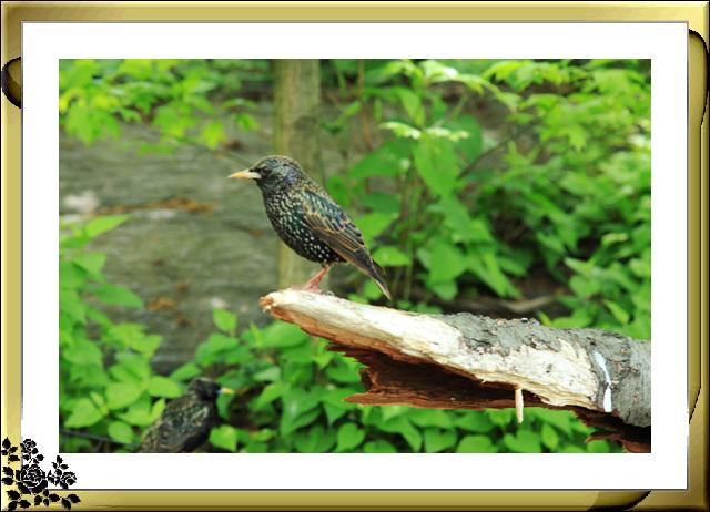 中央公园的小动物(5月16日)_图1-2