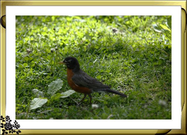 中央公园的小动物(5月16日)_图1-1