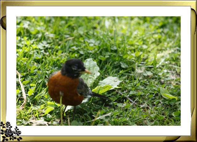 中央公园的小动物(5月16日)_图1-3