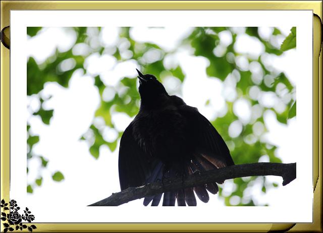 中央公园的小动物(5月16日)_图1-5