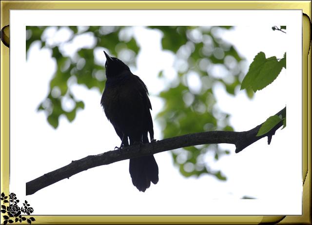 中央公园的小动物(5月16日)_图1-6