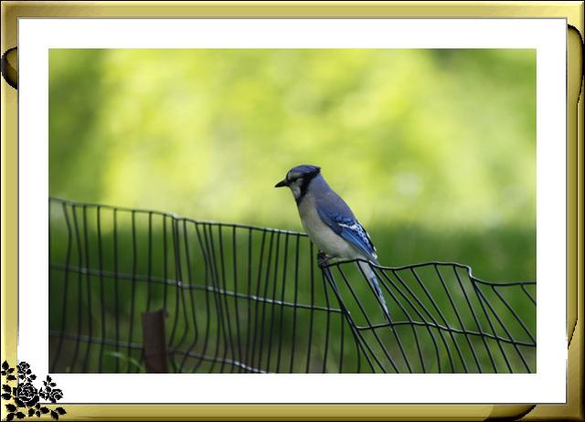中央公园的小动物(5月16日)_图1-8