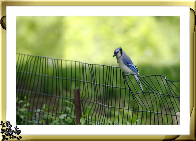中央公园的小动物(5月16日)_图1-7