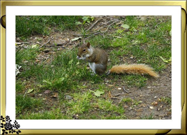 中央公园的小动物(5月16日)_图1-10