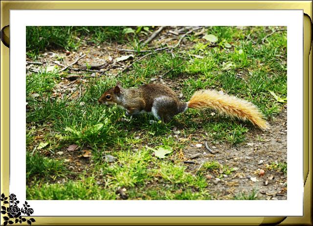 中央公园的小动物(5月16日)_图1-9