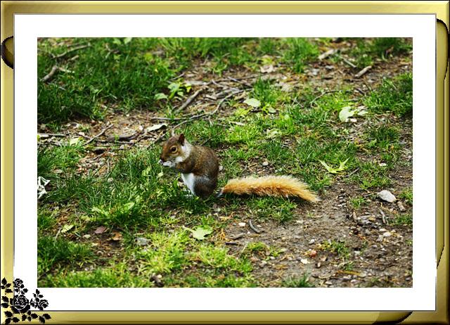 中央公园的小动物(5月16日)_图1-11