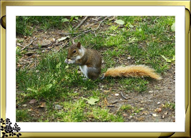 中央公园的小动物(5月16日)_图1-12