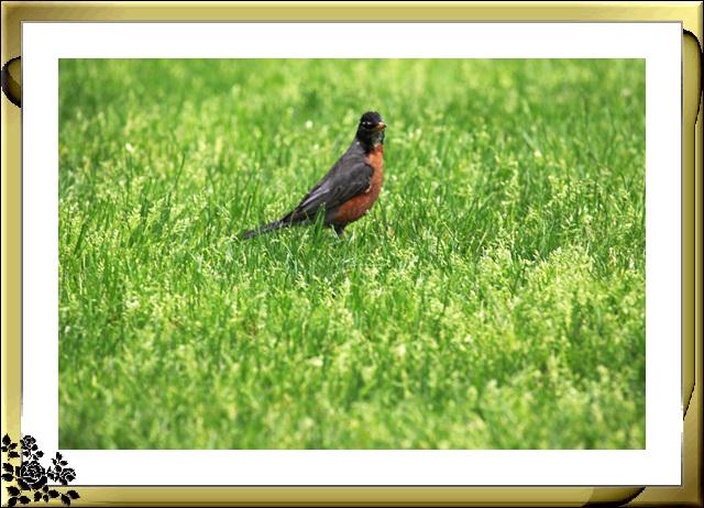 中央公园的小动物(5月16日)_图1-14