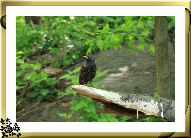 中央公园的小动物(5月16日)_图1-15