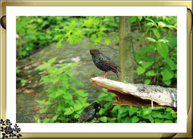 中央公园的小动物(5月16日)_图1-17