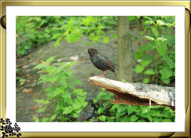中央公园的小动物(5月16日)_图1-16