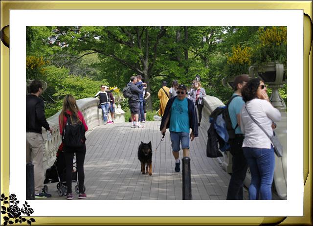 中央公园初夏,树木茂盛,花卉盛开,风景优美,游客兴旺! ..._图1-10