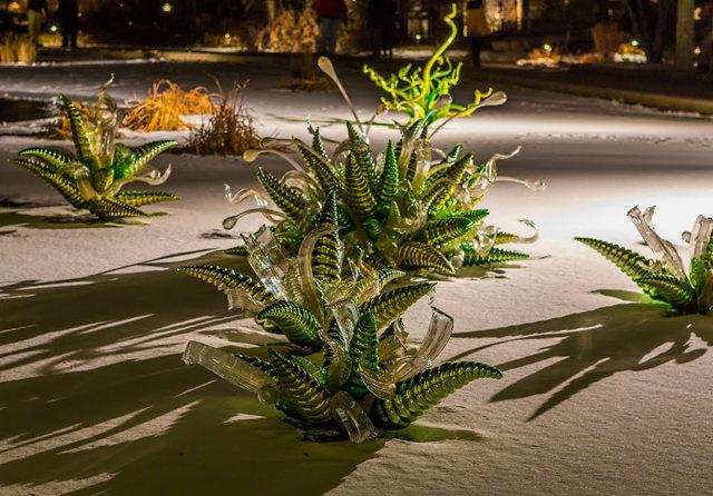 丹佛植物园拍玻璃雕塑_图1-6