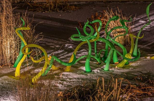 丹佛植物园拍玻璃雕塑_图1-8