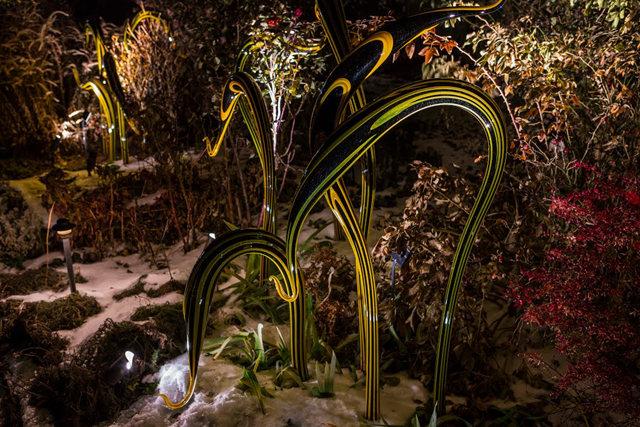 丹佛植物园拍玻璃雕塑_图1-19