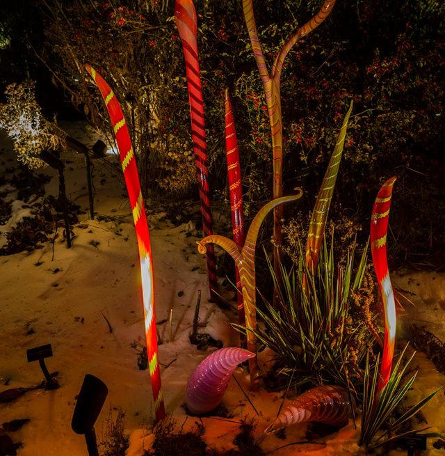 丹佛植物园拍玻璃雕塑_图1-20