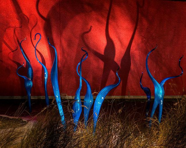 丹佛植物园拍玻璃雕塑_图1-24