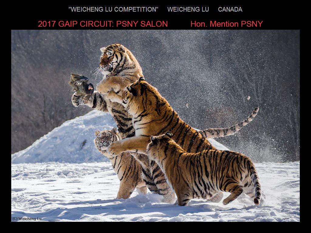 纽约摄影学会国际联赛开放组获奖作品分享_图1-13