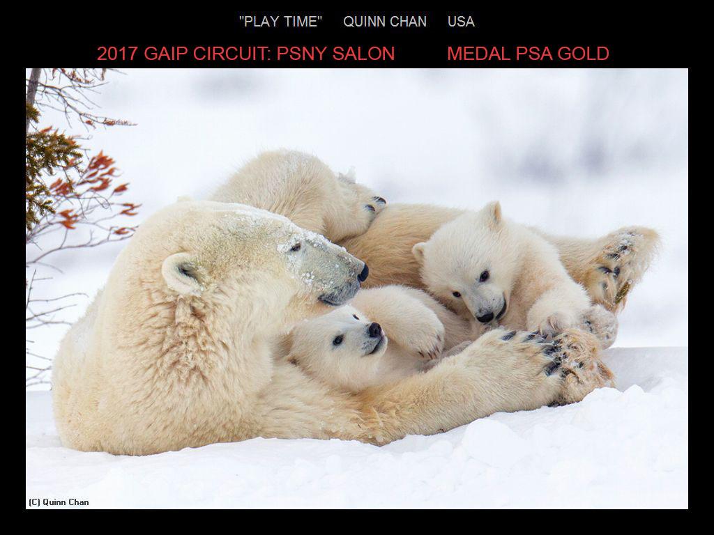 纽约摄影学会国际联赛开放组获奖作品分享_图1-1