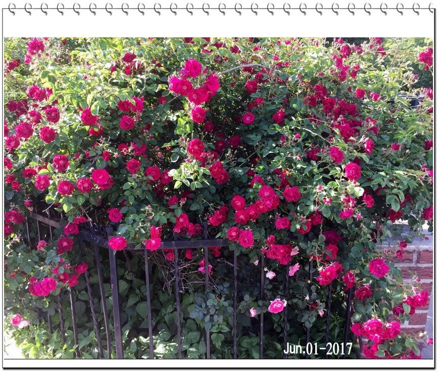 花的日記_图1-1