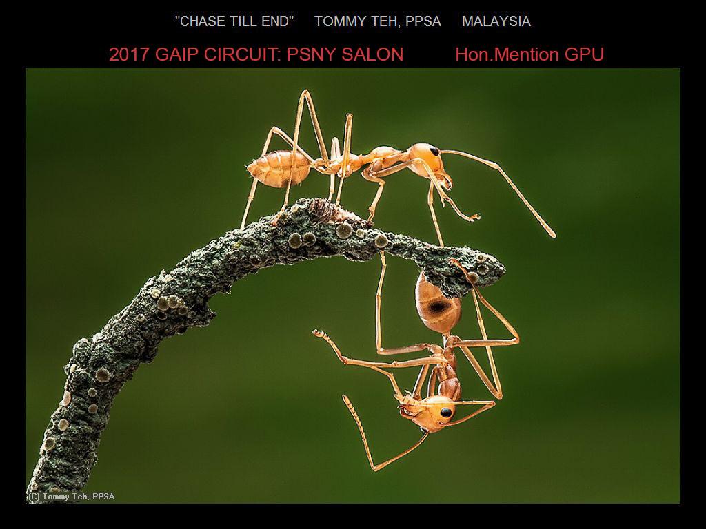"""敬请欣赏""""纽约摄影学会国际联赛""""自然组获奖作品_图1-19"""