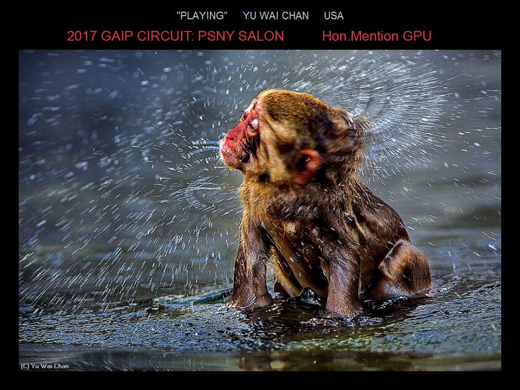 """敬请欣赏""""纽约摄影学会国际联赛""""自然组获奖作品_图1-20"""