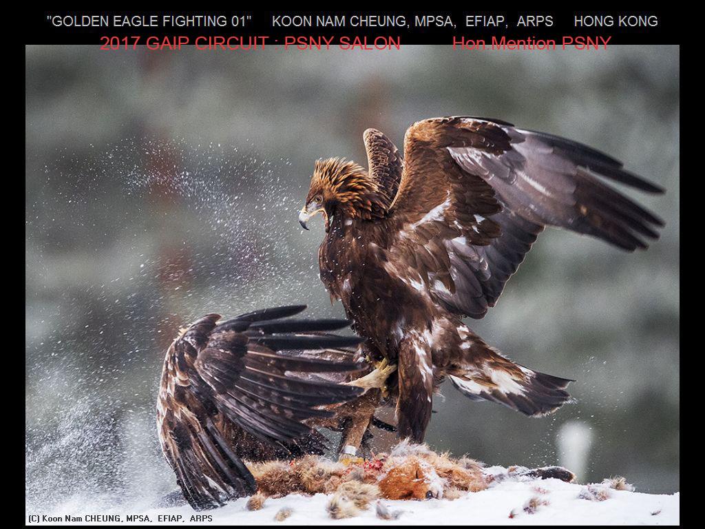 """敬请欣赏""""纽约摄影学会国际联赛""""自然组获奖作品_图1-16"""