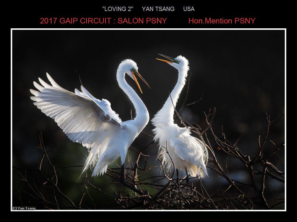 """敬请欣赏""""纽约摄影学会国际联赛""""自然组获奖作品_图1-9"""