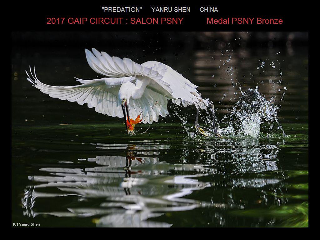 """敬请欣赏""""纽约摄影学会国际联赛""""自然组获奖作品_图1-6"""